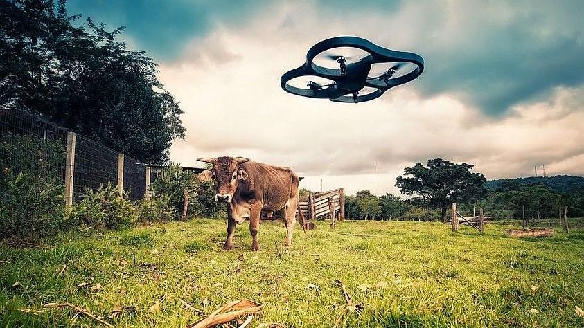 dron_krava.jpg