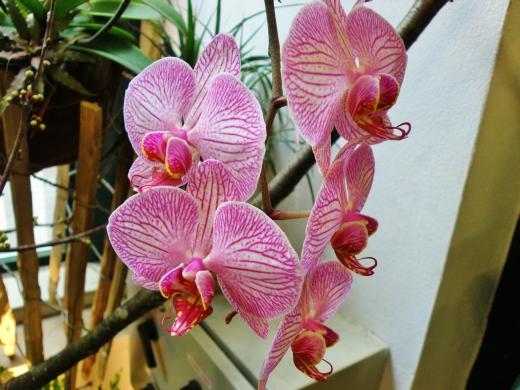 orchidei_2.jpg