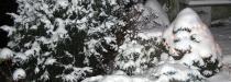 vianoce_2.jpg