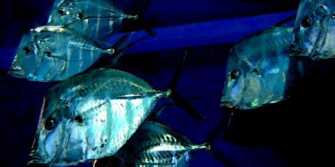 akvarium2.jpg