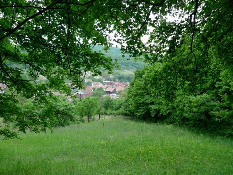 arboretum_4.jpg