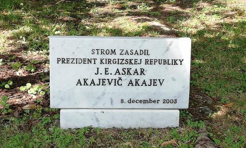 strom_akajeva1.jpg